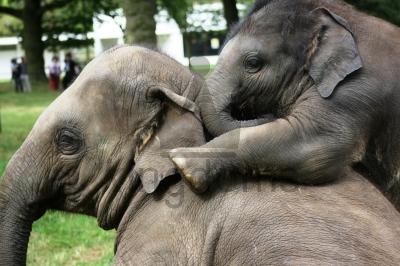 Baby Elephant Confiding