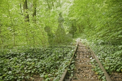 Overgrown Train Track