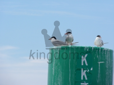 Terns On A Green Pile Against A Blue Sky