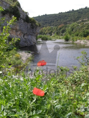Red Poppies by the River
