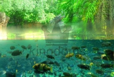 Half Aquarium