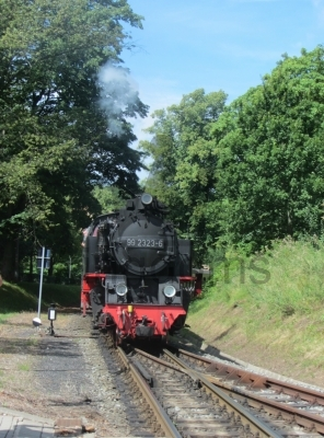 Molli The Train