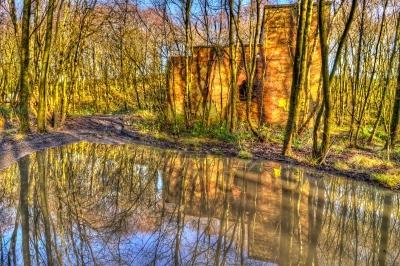 Woodland Pond