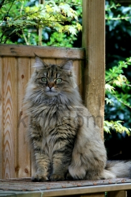 Fluffy Cat on Garden Bench