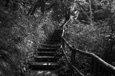 Secret Steps