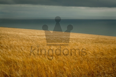 Cornfield by the Sea