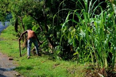 St Lucian Farmer