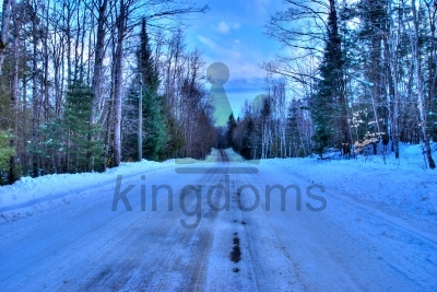 Icy Forest Road