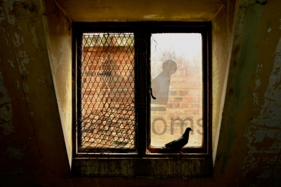 Pigeon In Window