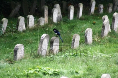 One For Sorrow, Friends Meeting House, Wanstead