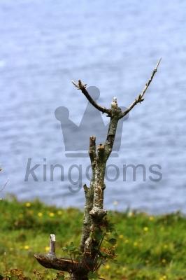 Desperate Twig!