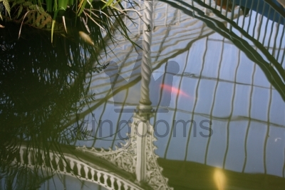 Fish And Reflections, Glasgow Botanical Gardens