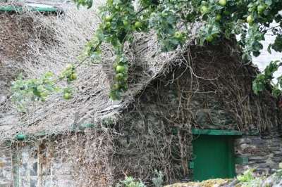Ivy-Covered Cottage, Padstow, Cornwall
